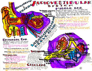 audiovestibular system