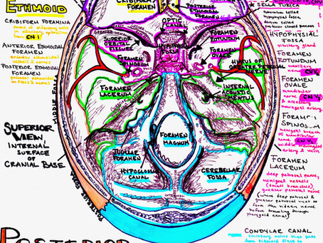 How Can A Colorful Anatomy and Physiology Study Guide Help You Prepare for Exams?