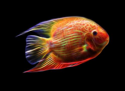 Red Spotted Severum Fractal Art - You Print Digital Download