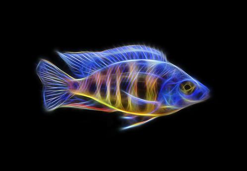 Taiwan Reef (V2) Fractal Art - You Print Digital Download