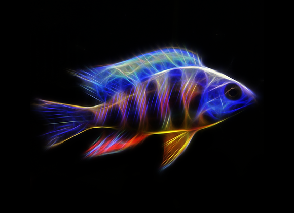 Taiwan Reef (V1) Fractal Art - You Print Digital Download