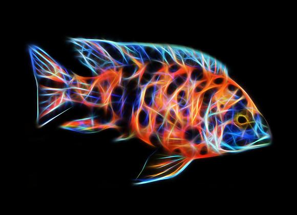 OB Peacock Fractal Art - You Print Digital Download