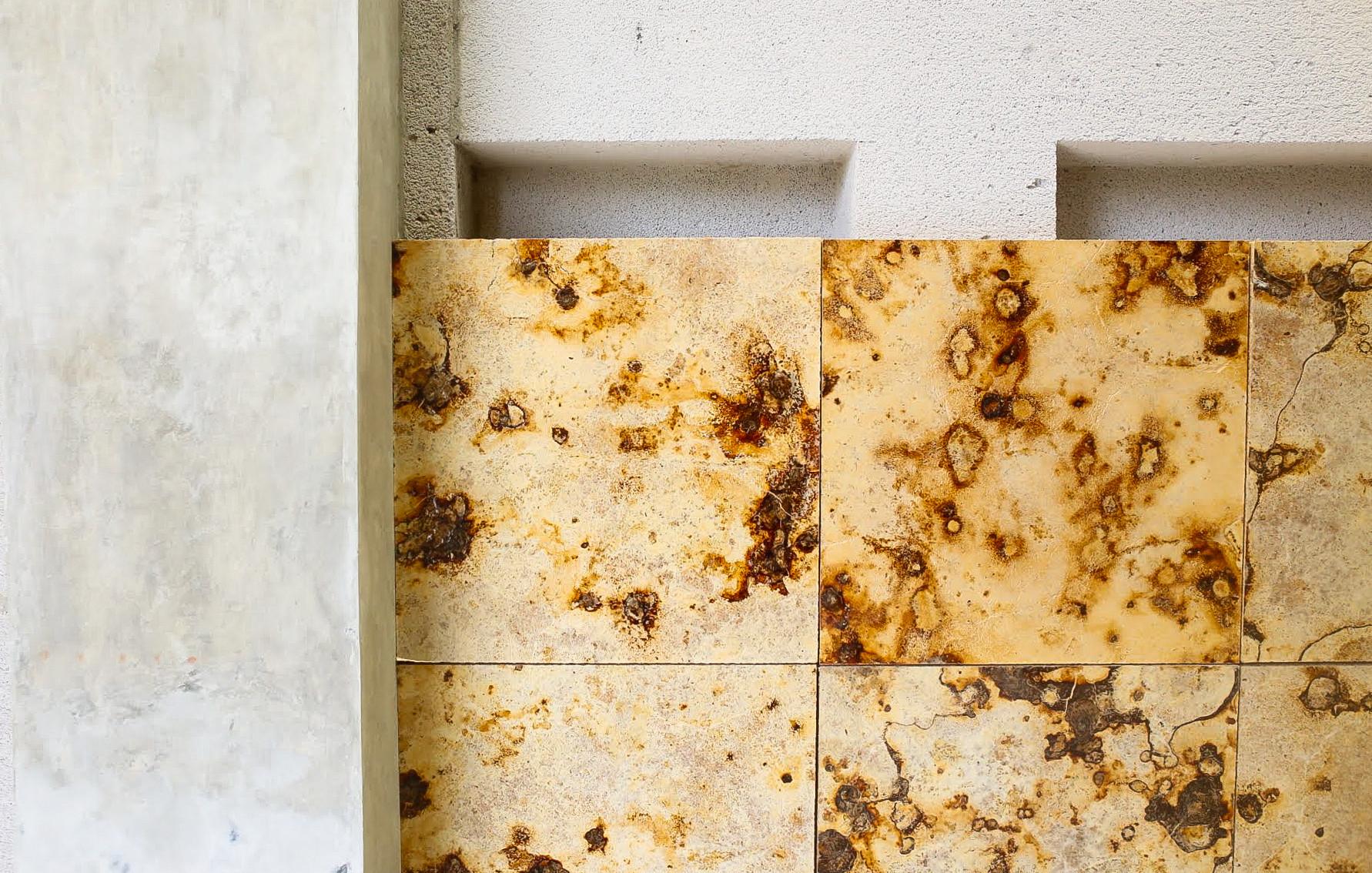 Mycelium | Mycotech