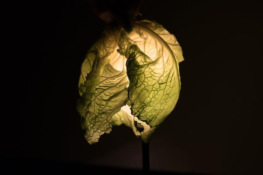 cabbage -1.jpg