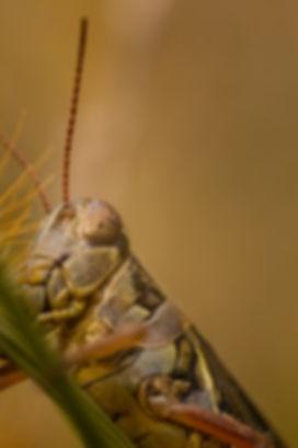 bugs -1 copy.jpg