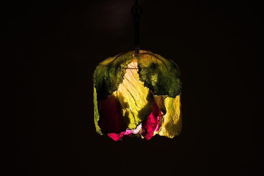 cabbage-22.jpg