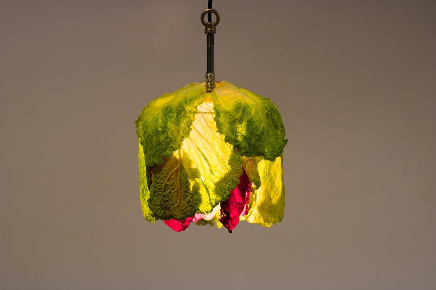 cabbage-46.jpg