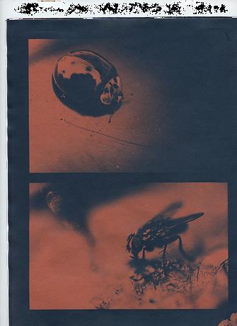 cyanotype 4 .png