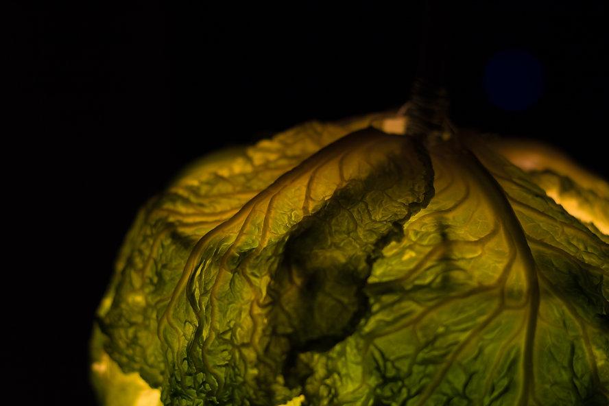 cabbage-94.jpg