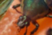 bug -1.jpg