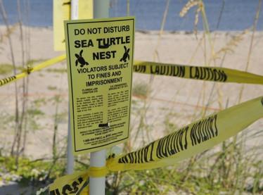Threats to Boca Raton's Pristine Beaches