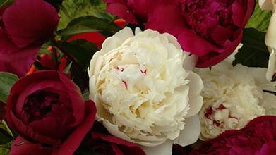 Alaska Peony Growers Association, Bridal Bouquet, Flowers, Florist, Bride and Her Alaska Wedding Peonies