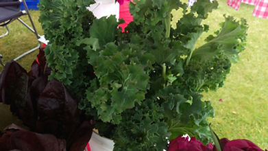 Fresh vegetables, Kenai, alaska, Kale, Tomatoes, peas, beans, radishes, lettuce, cucumbers, squash