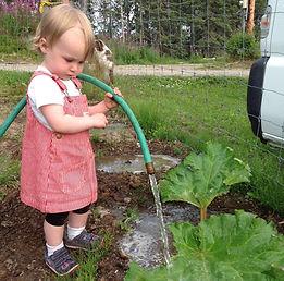 Rhubarb, Jam, Jellie, Alaska Peony Growers Association, Bridal Bouquet, Flowers, Florist, Bride and Her Alaska Wedding Peonies