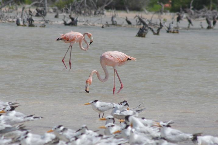Mexico Part 13 - Campeche, Yucatan and Quintana Roo