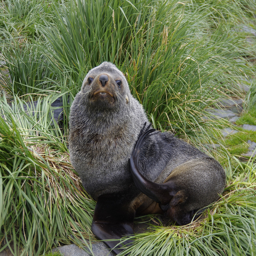 20190126-Page-Cooper Bay Seal