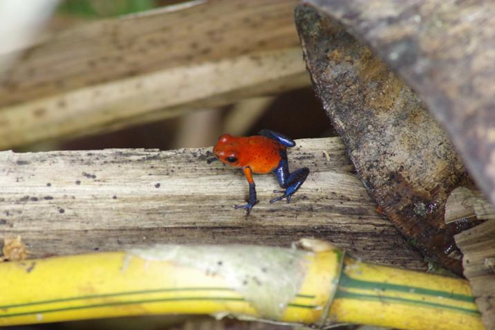 Nicaragua Part 2 - Water borne...