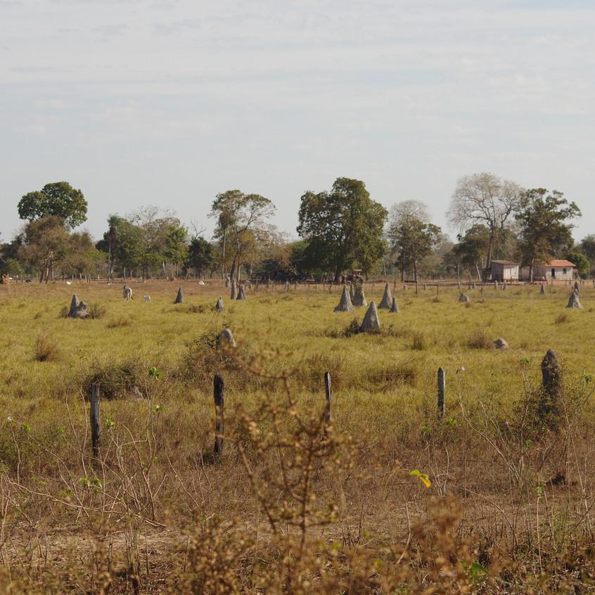 IMGP1780 Ant Hills