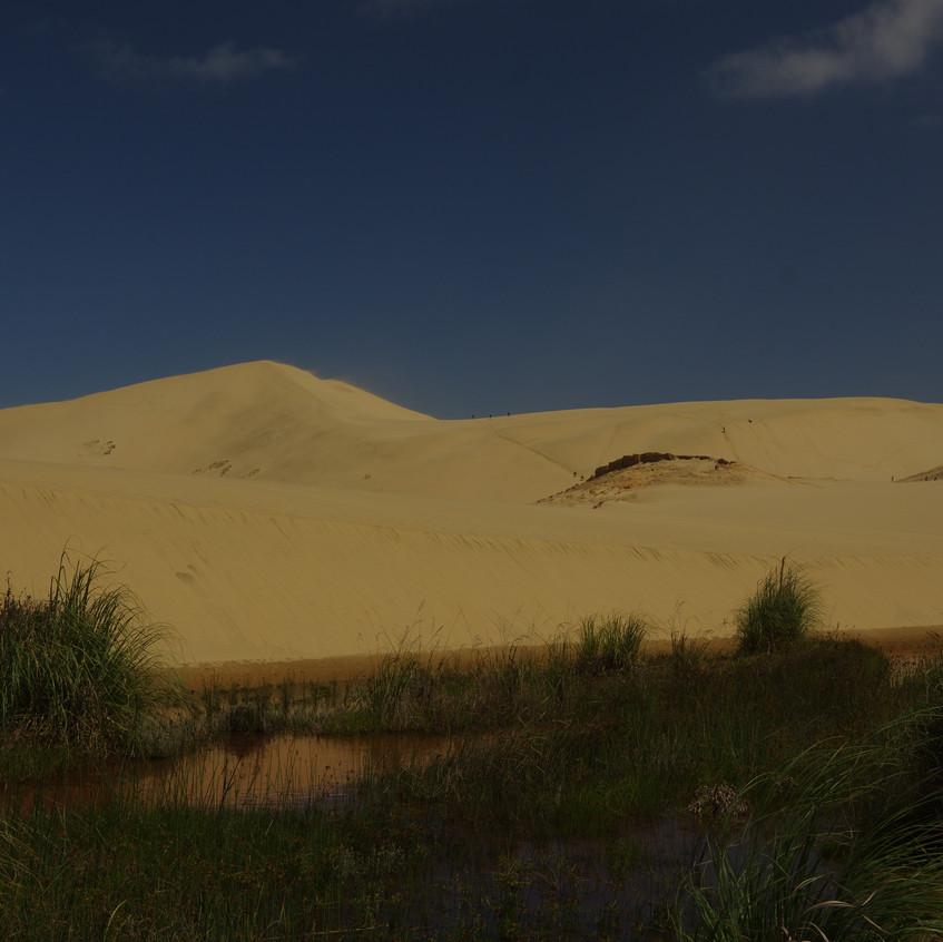 IMGP8104 Te Paki Giant Sand Dunes