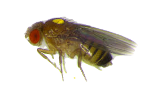 Fly-PaintedWigby_edited.png