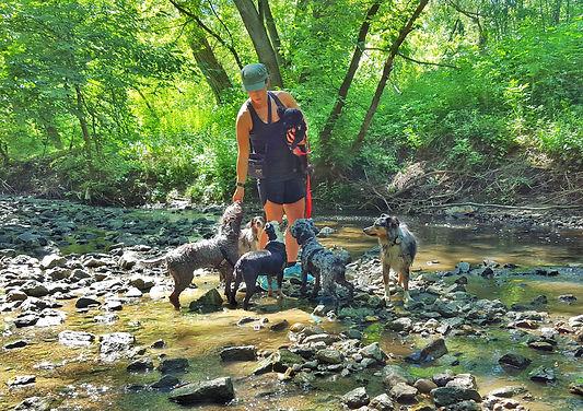 Dog Walking, Daycare & Homestyle Boarding