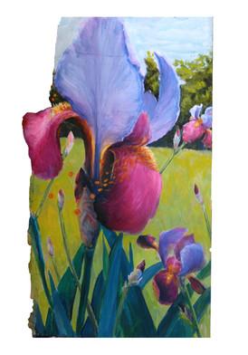 Iris Photobomb