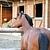 Séance d'ostéopathie cheval