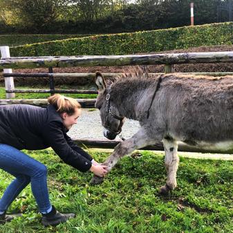 Séance d'ostéopathie sur un âne.