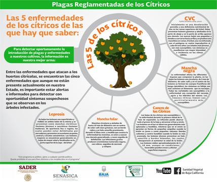 CITRICOS-Infografia PRC.jpg