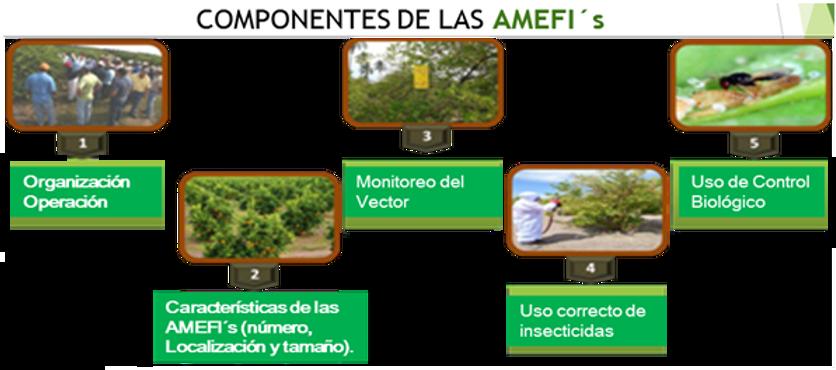 AMFIS.png