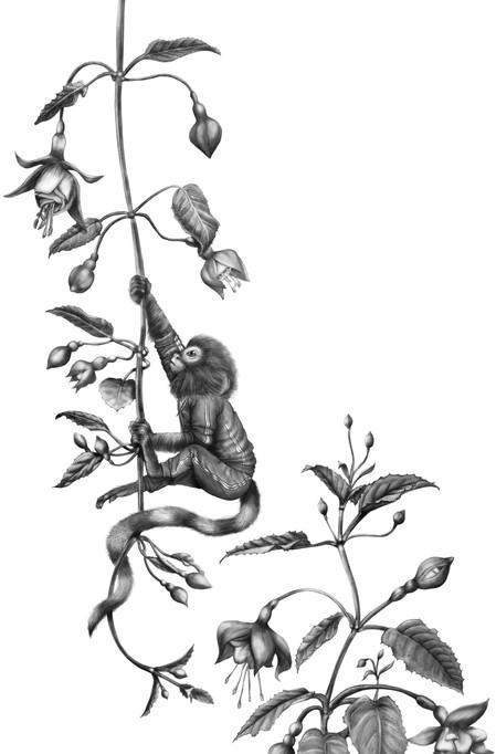Monkey in Training II