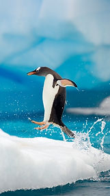 Penguin-Jumping-iphone-wallpaper-ilikewa