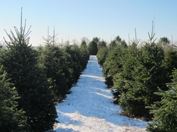 Some of this years trees