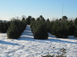 more 2014 trees