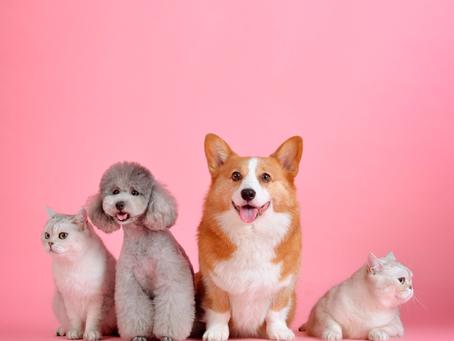 Animais de estimação: Como combater os parasitas