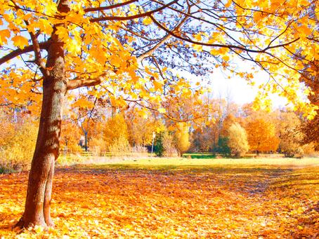 Outono: Alguns cuidados de saúde