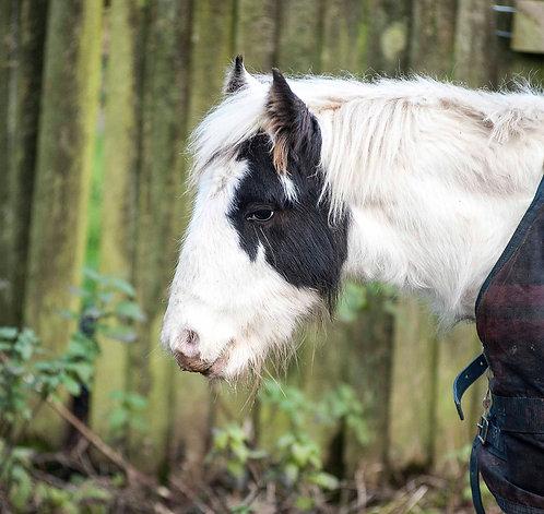 Sponsor a pony - Felix