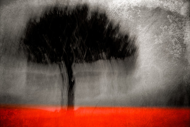 The Wishing Trees 016.jpg