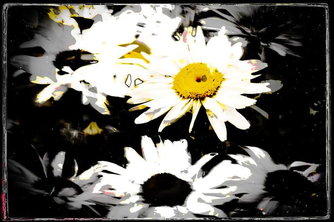 The Garden of Persephone 023