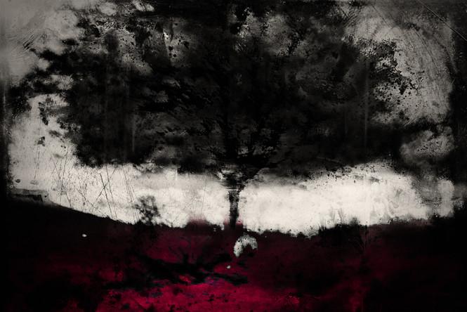The Wishing Trees 007.jpg