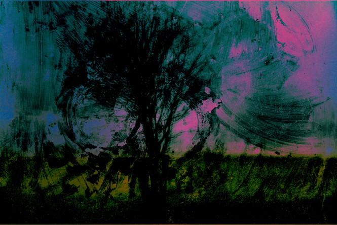 The Wishing Trees 008.jpg