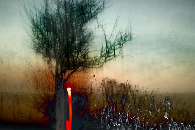 The Wishing Trees 026.jpg