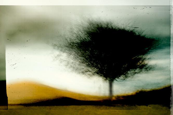 The Wishing Trees 002.jpg