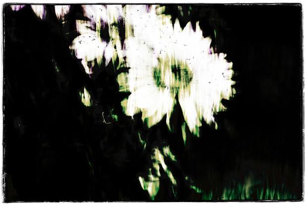 The Garden of Persephone 010