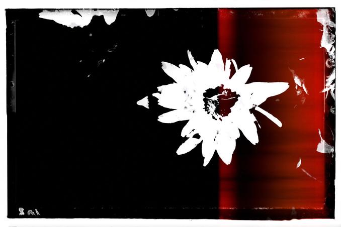 The Garden of Persephone 026