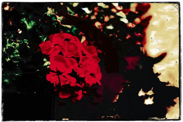 The Garden of Persephone 040