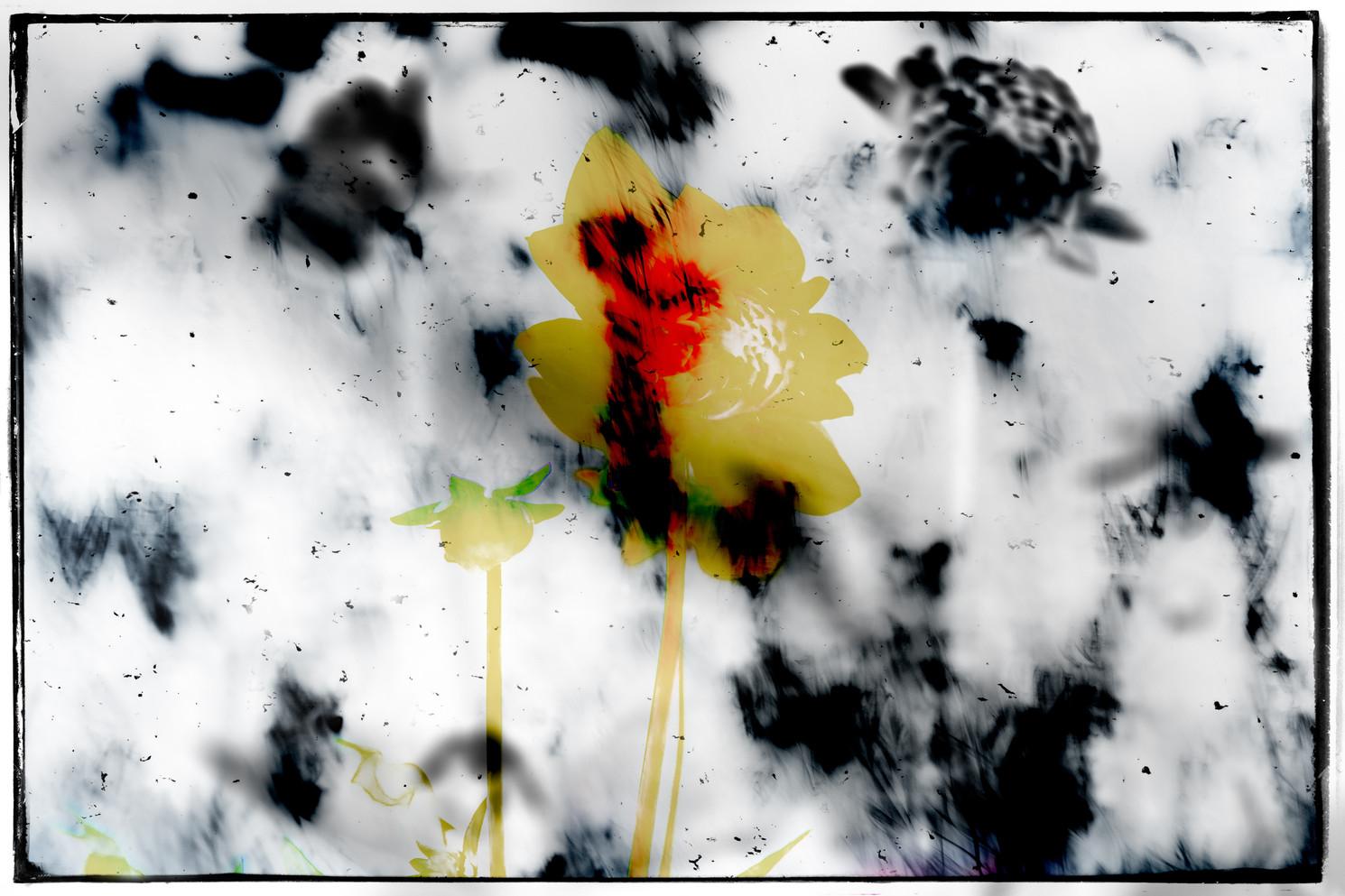 The Garden of Persephone 013