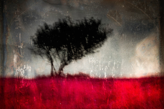 The Wishing Trees 001