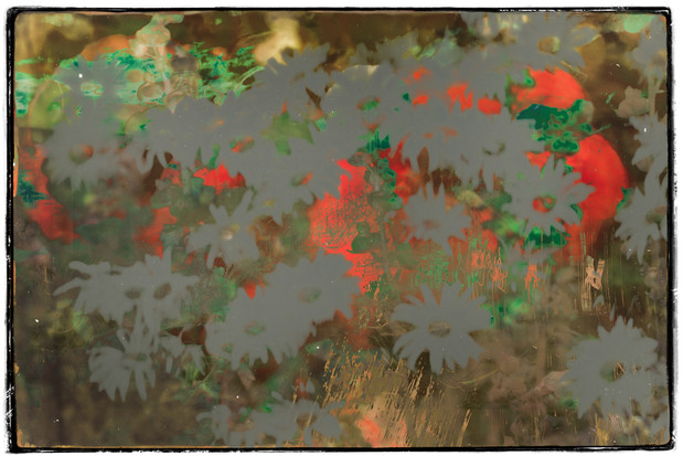 The Garden of Persephone 037