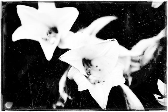 The Garden of Persephone 017